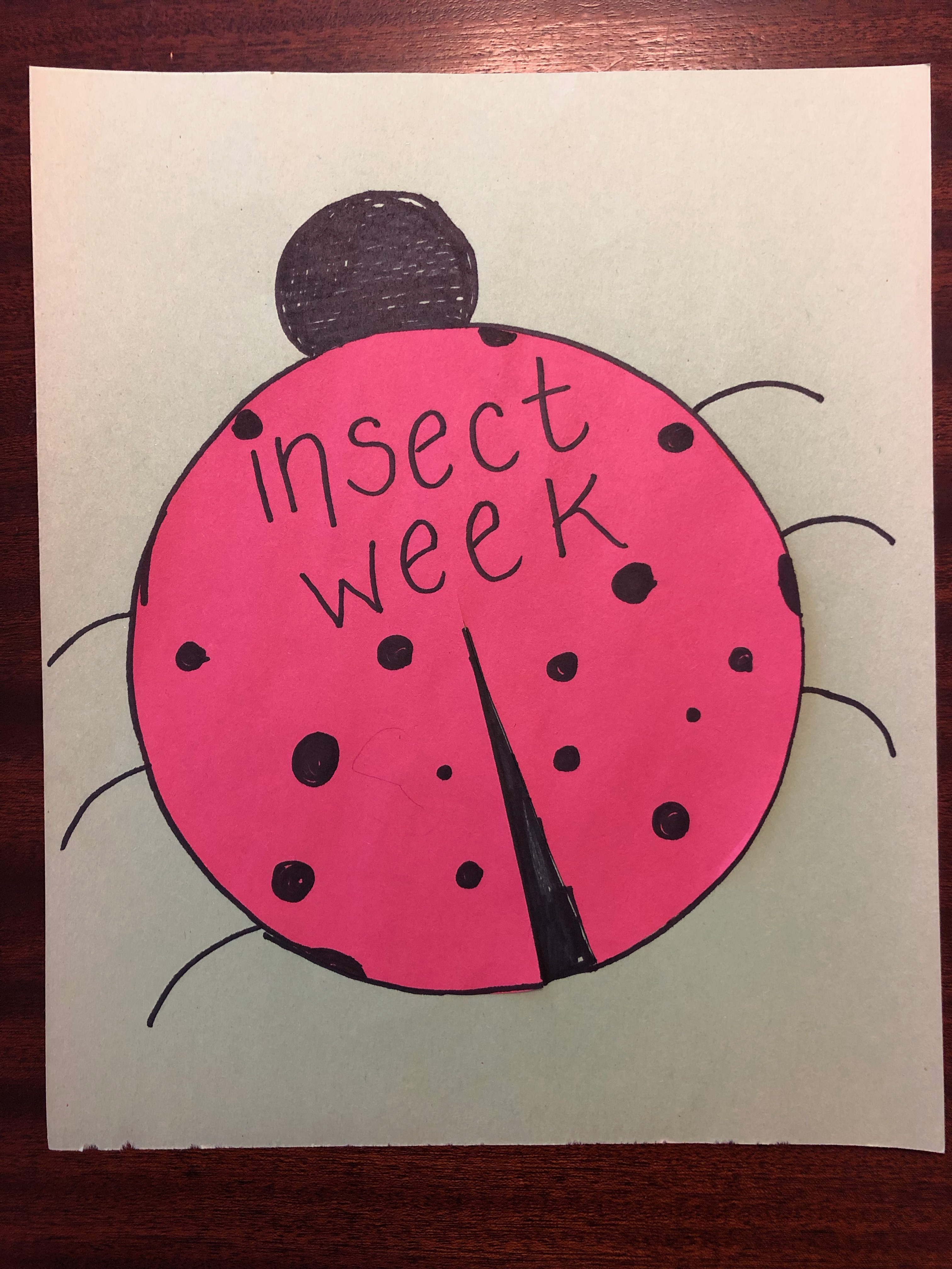 A paper ladybug made from red construction paper with the words insect week written across it
